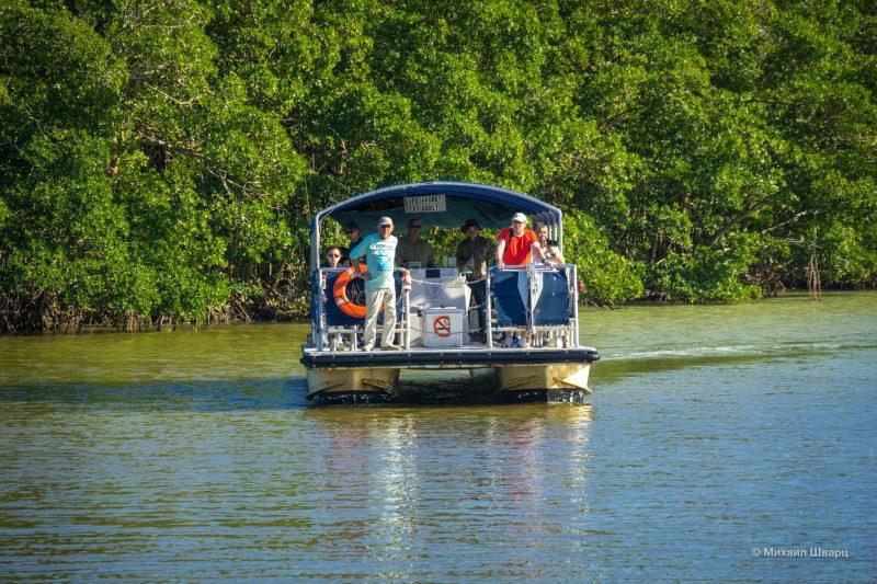 Смотрим аллигаторов в парке Everglades 9