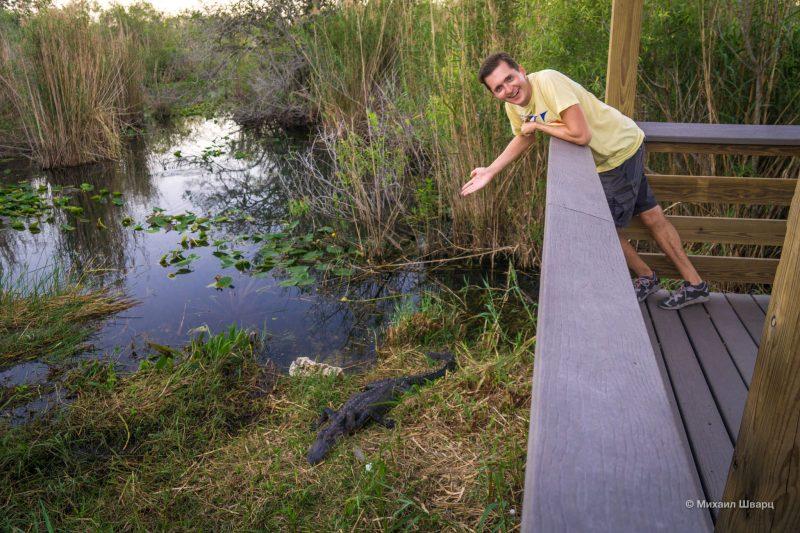 Смотрим аллигаторов в парке Everglades 11