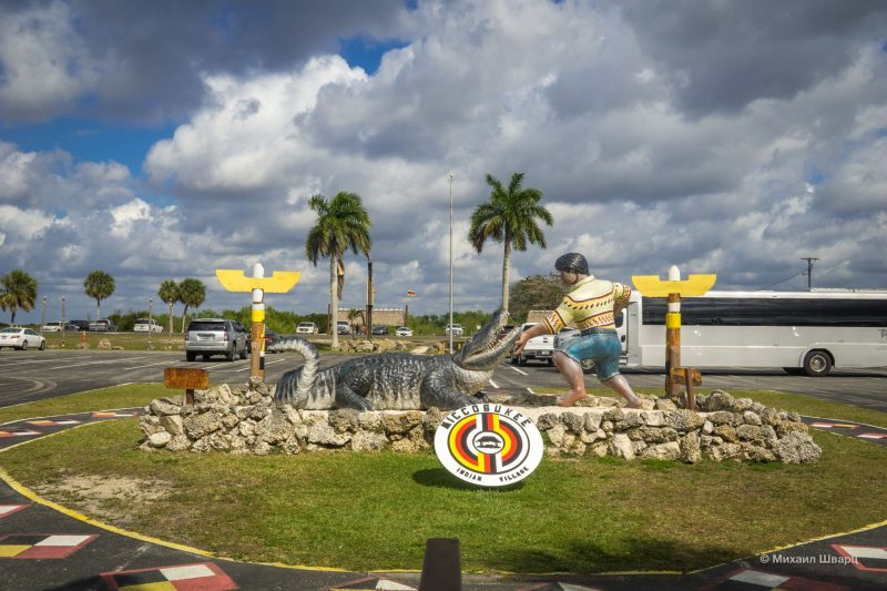 Смотрим аллигаторов в парке Everglades 15