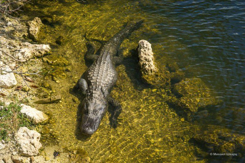 Смотрим аллигаторов в парке Everglades 19