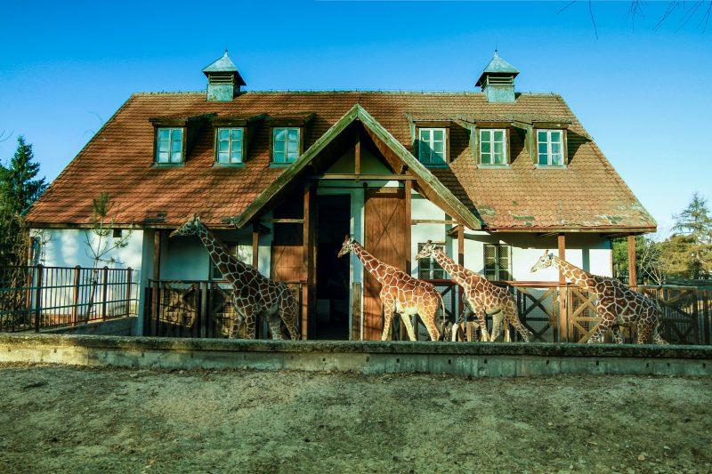 Зоопарк (Wroclaw Zoo)