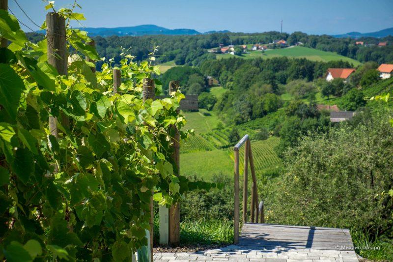 Австрийское вино Uhudler 4