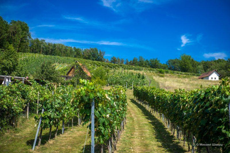 Австрийское вино Uhudler 6