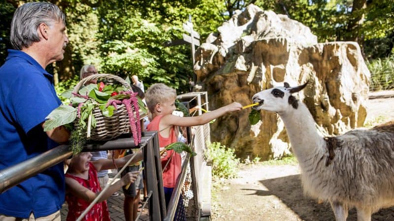 В амстердамском зоопарке Artis