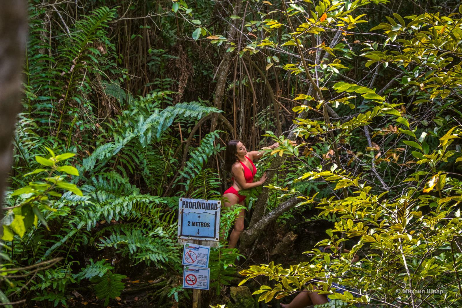 Лесная амазонка