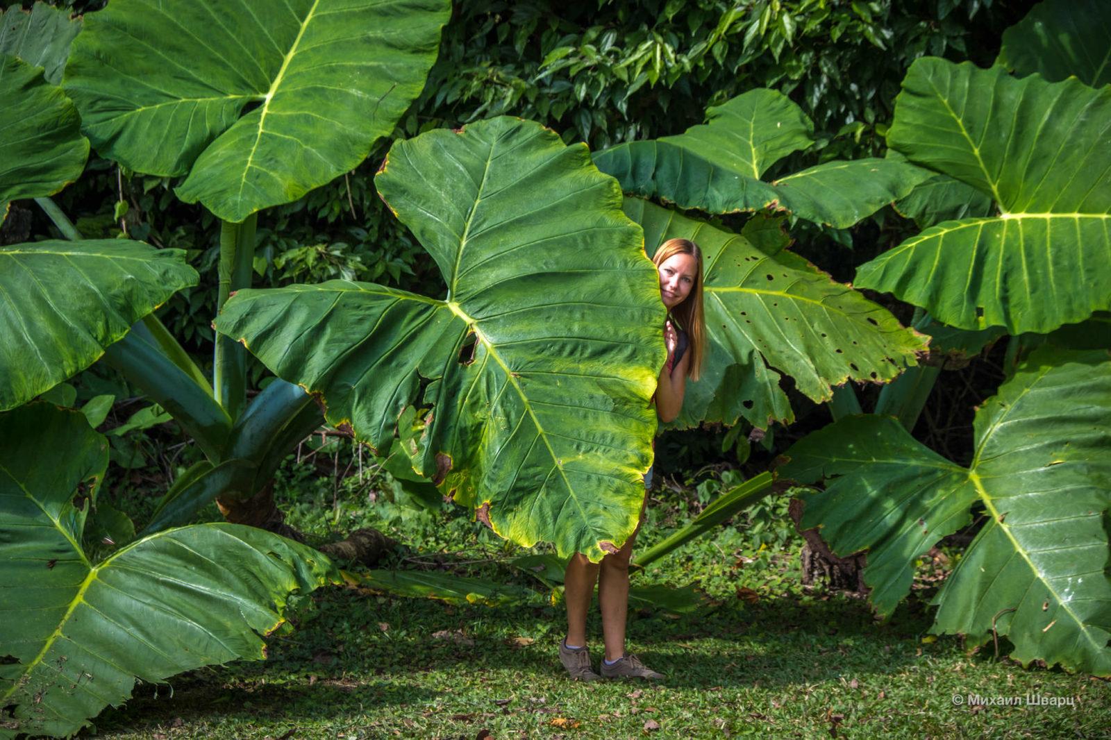 Огромный лист