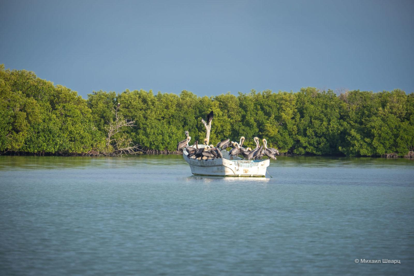 Пеликаны захватили лодку