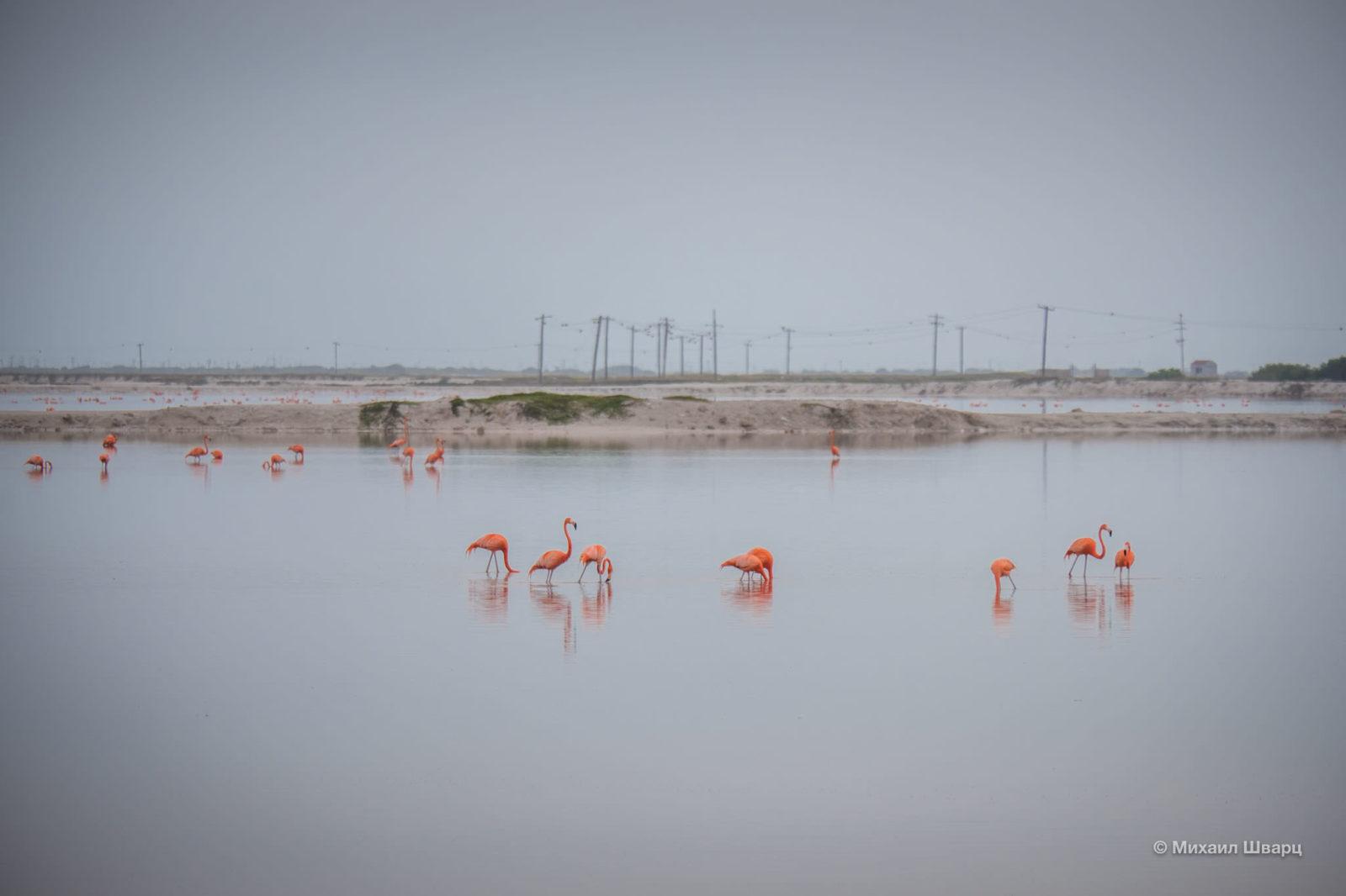 Розовые фламинго что-то жрут
