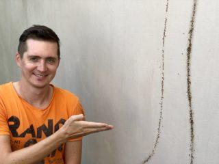 Атака муравьев в нашем доме на Самуи