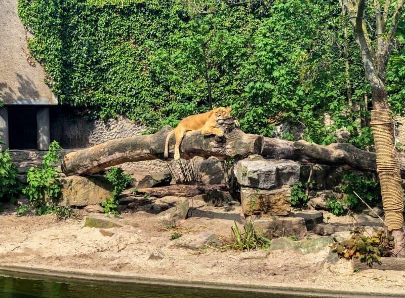 Королевский зоопарк Артис (ARTIS Amsterdam Royal Zoo)