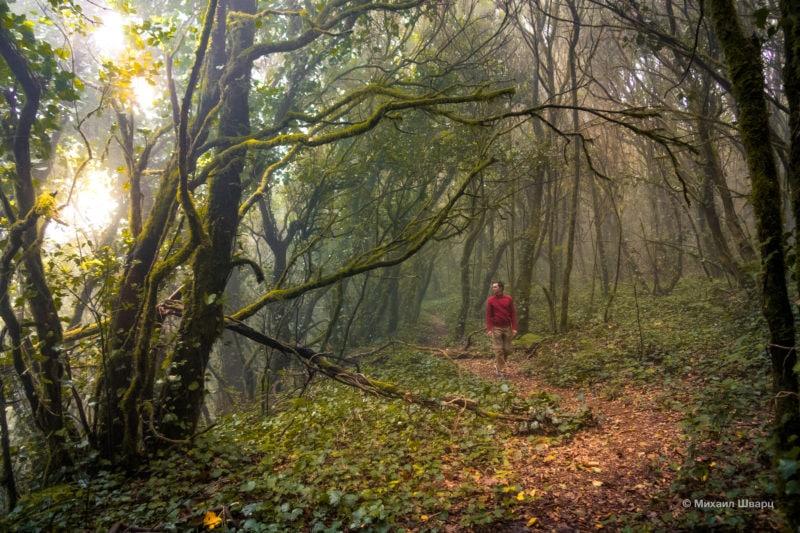 Гуляли по волшебному лесу