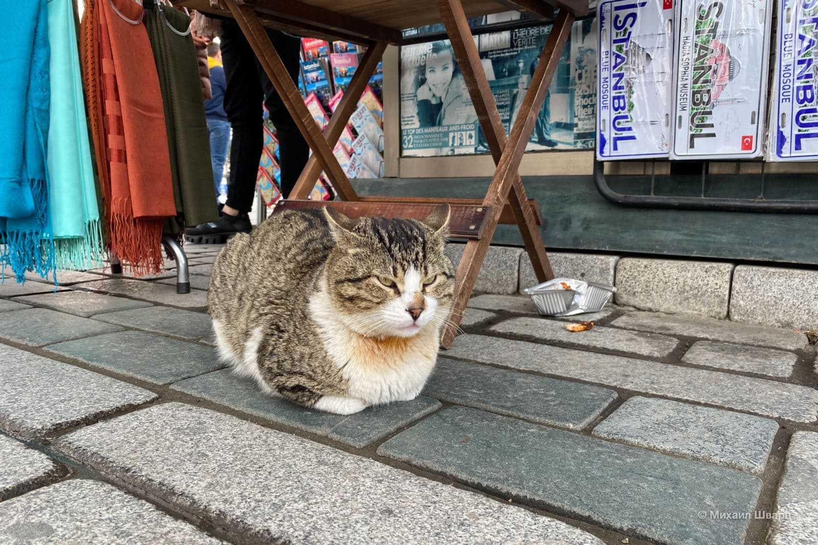 Ожидающий кот