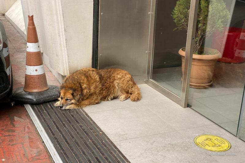 Жирная собачка – обязательный атрибут города