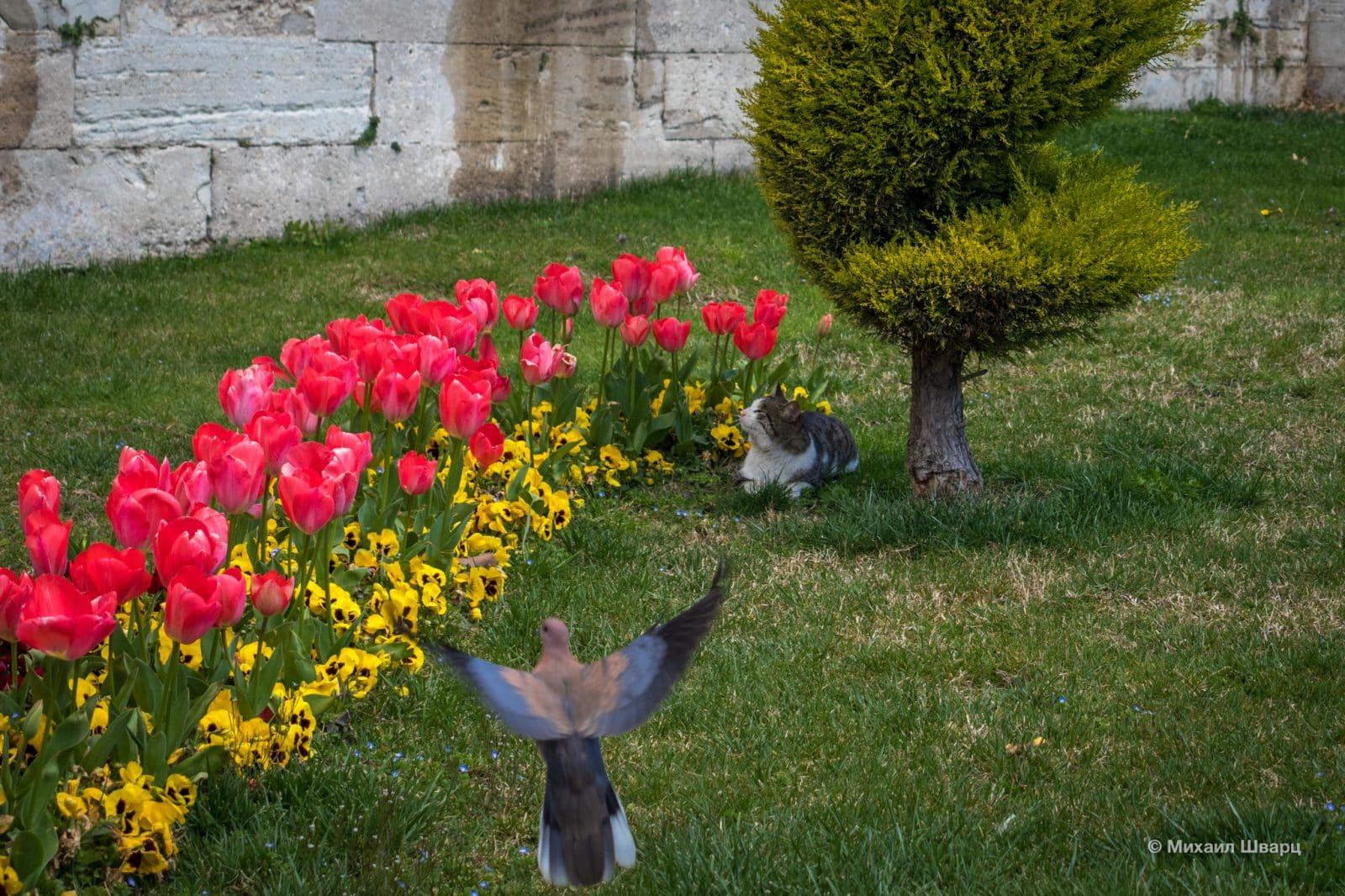 Романтический кот